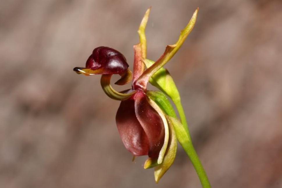 Самые необычные цветы мира