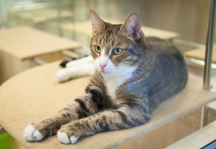 Знаменитый кот Борис. / Фото: Антон Галкин