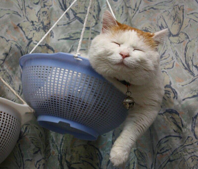 Кошачий расслабон гифки, кошки, фото