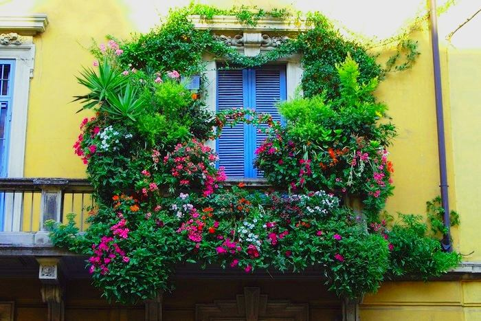 Озеленение заборчика балкона