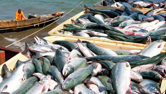 В России ужесточат правила рыболовства из-за изменений климата