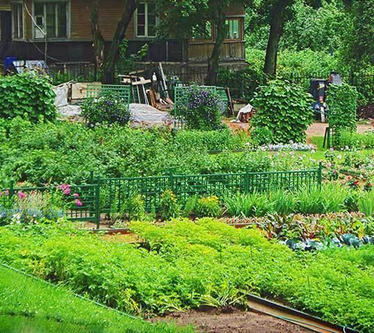 Как повысить урожайность и эффективность грядок