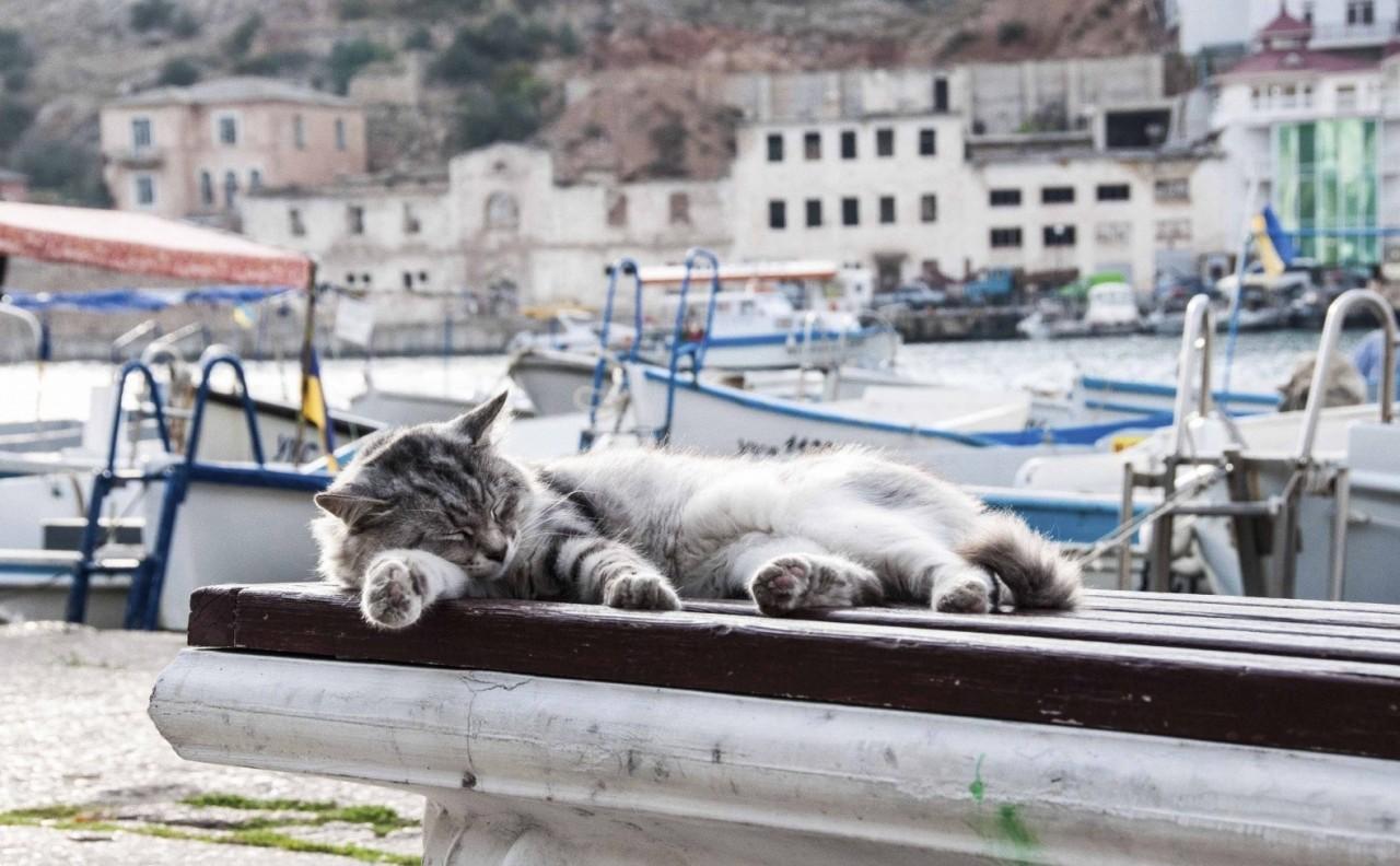 Иногда улов таков, что явно зажравшиеся котяры начинают перебирать харчами. балаклава, интересное, коты, юмор