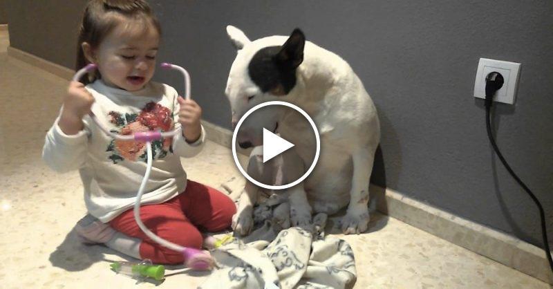 Малышка играет в доктора с бультерьером. Пёс терпит все процедуры