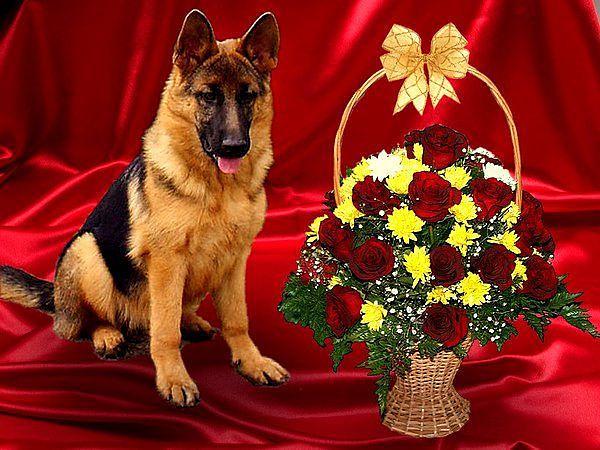 Поздравление с днем рождения картинки с животными