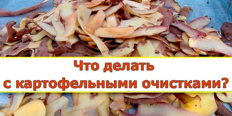 Картофельные очистки — лучшее удобрение для смородины.