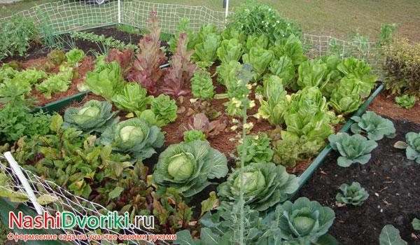 Овощные акробаты: как разместить овощи на небольшом участке