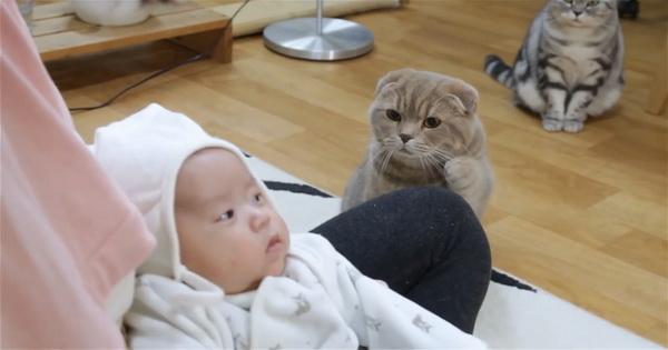 Коты впервые увидели новорожденного ребенка. Реакция пушистых вызовет у вас улыбку!