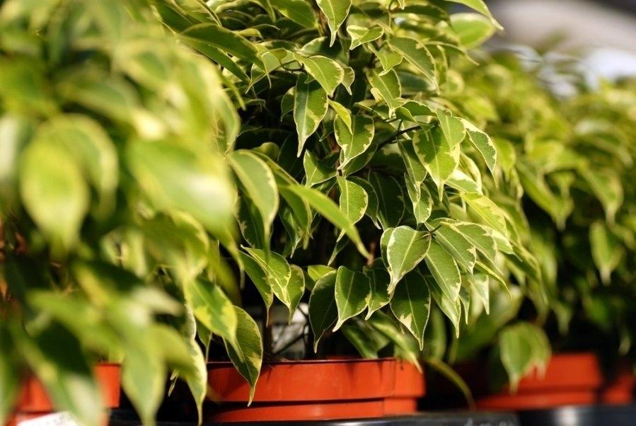 Как выбрать комнатные растения для каждой комнаты в доме