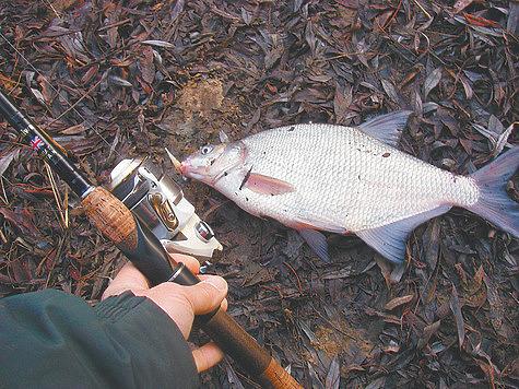 Хищные повадки мирной рыбы