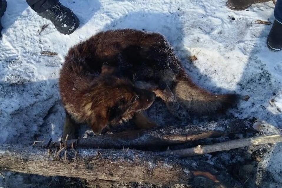 Рыбаки спасли примерзшую ко льду собаку в Барнауле