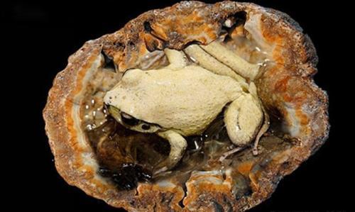 Животные в камне Существуют несколько документальных случаев, когда лягушек, жаб и других небольших животных находили в цельном камне живых. Странно то, что люди находили животных не только в природных образованиях, таких как камень или деревья, но и в искусственных.