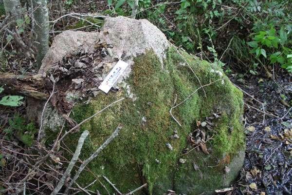 Говорящий камень в Беларуси