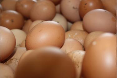 Уловки с датой выпуска, размером и мытьем при продаже яиц. Как не дать себя обмануть рис-6