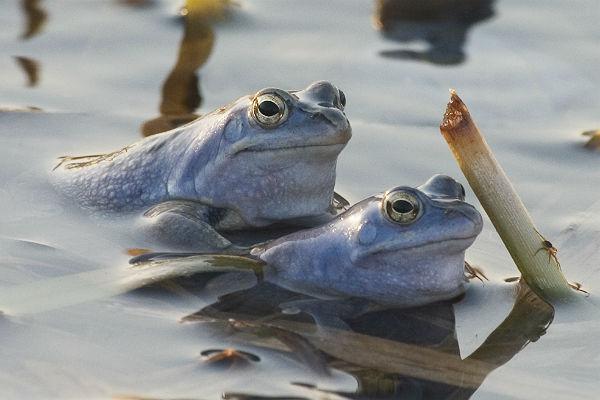 Турецкие жандармы спасли от съедения более 7 тысяч лягушек