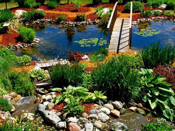 Растения, которые любят влагу: что лучше всего посадить рядом с водоемом?
