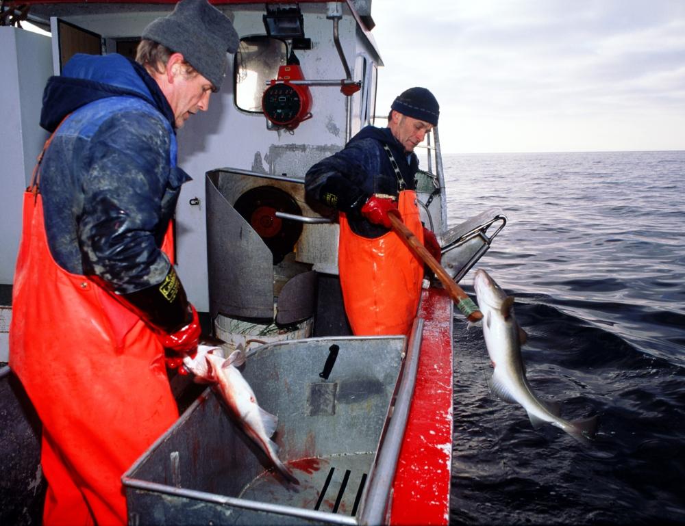 норвежская рыболовная компания nergard as