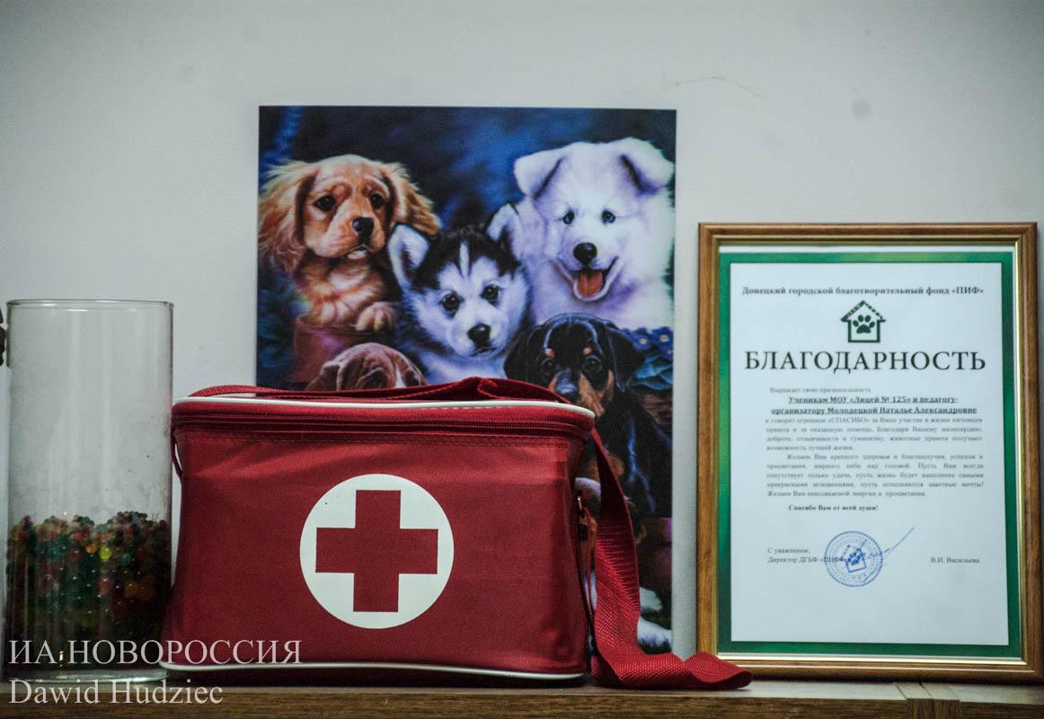 Донецк: как переживают войну братья наши меньшие