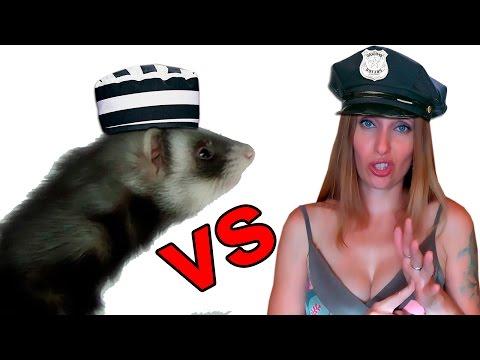 ХОРЁК ДОМАШНИЙ/ПИТОМЕЦ АТАКУЕТ/ My favorite ferret