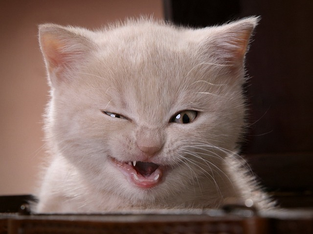 Позитив зверский кошачий оГИ…
