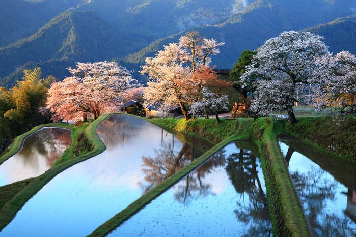 Японская весна. красивые места, красота, невероятные места, фото