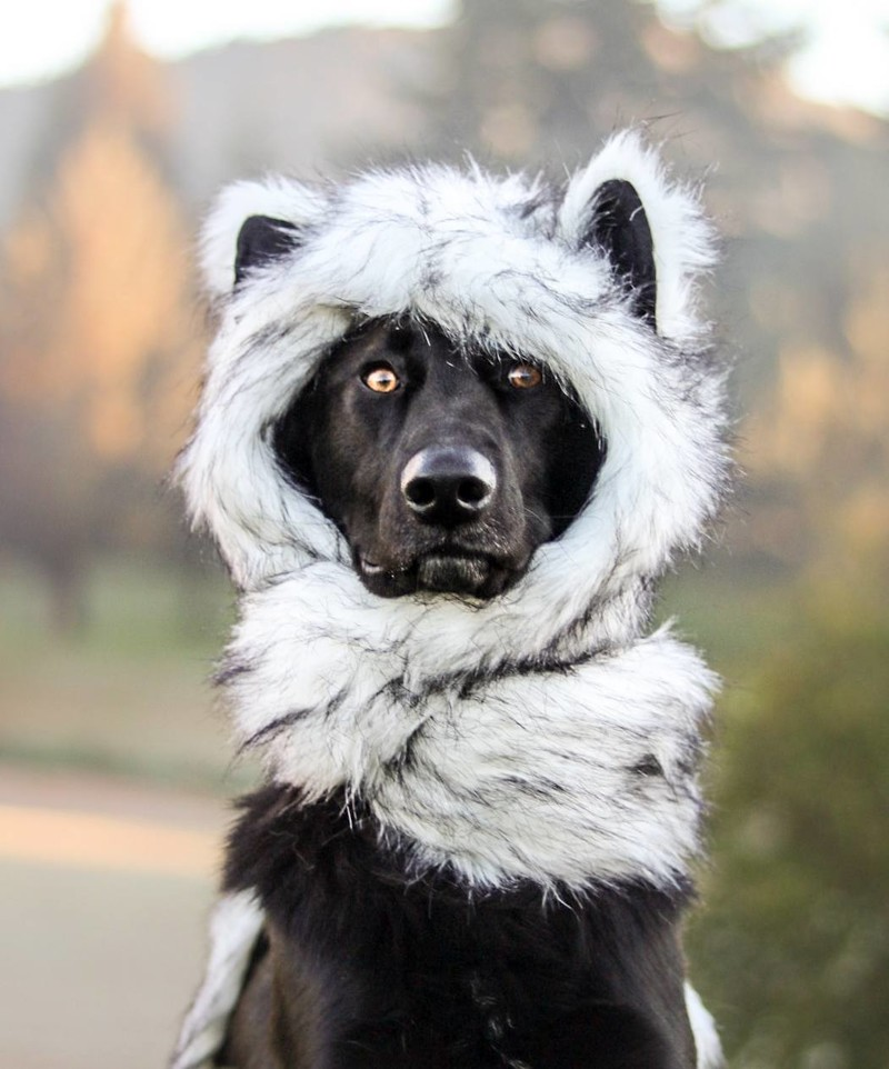 Эти две собаки, олицетворяющие день и ночь, непременно сделают ваш день добрым! белое, день и ночь, живность, животные, милота, окрас, собаки, черное
