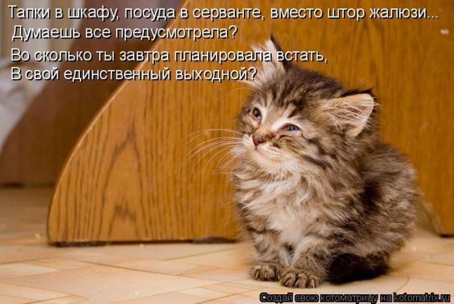 Смешная котоматрица -8 на 5 минутке