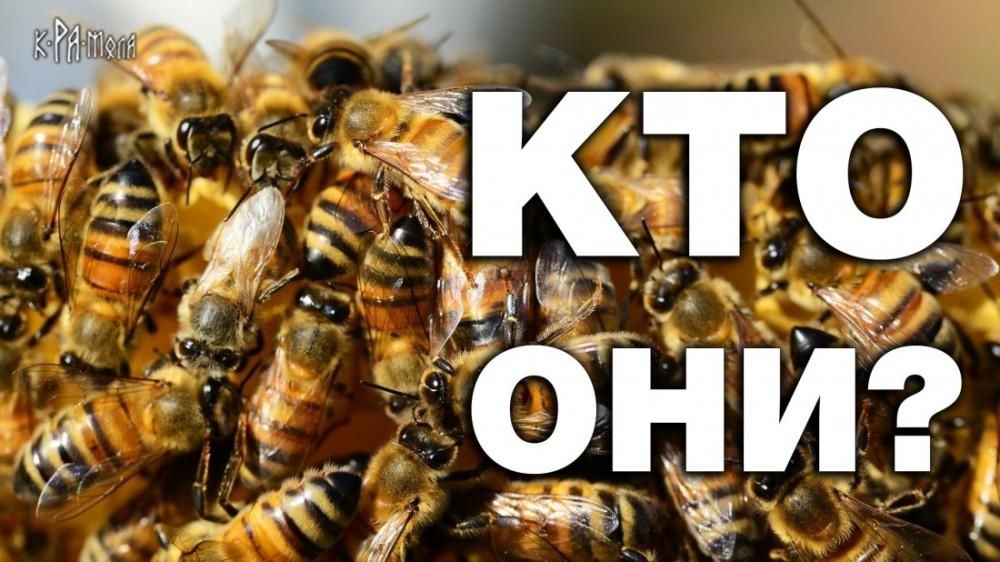 Разум пчелиного улья