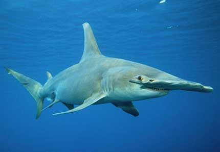 Картинки по запросу дальневосточный морской заповедник животные