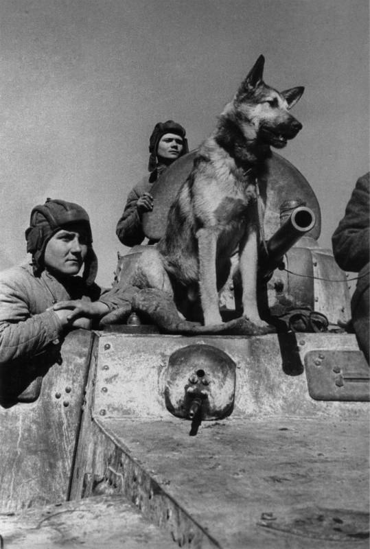 Пёс-сапёр Джульбар 22 июня, Великая Отечественная Война, день памяти и скорби