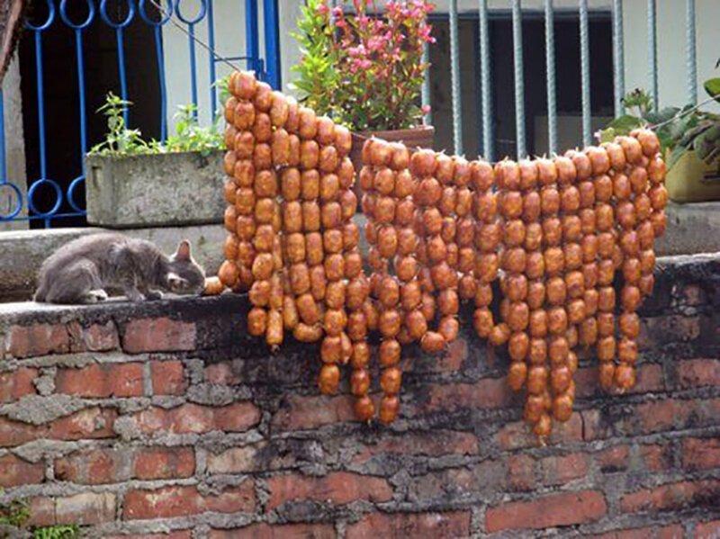 Кошки, которым надоело выпрашивать еду