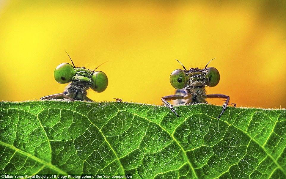 Короткий список фотоконкурса Royal Society of Biology Photographer of the Year 2017