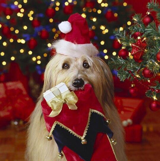 Новый Год - это время исполнения желаний, подарков, чудес и добрых...