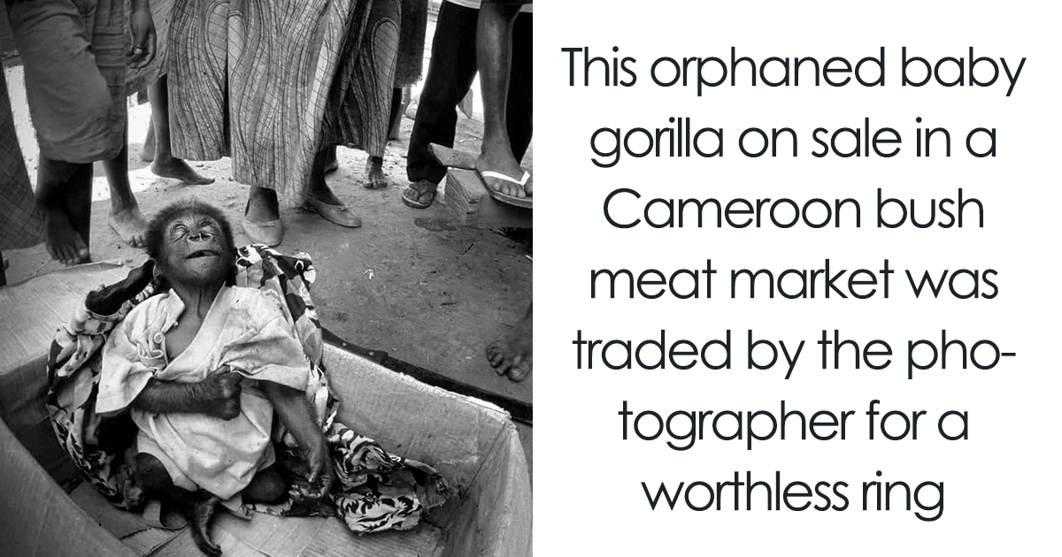 23 Heartbreaking Photos Brought Together In A Book To End The Illegal Wildlife Trade