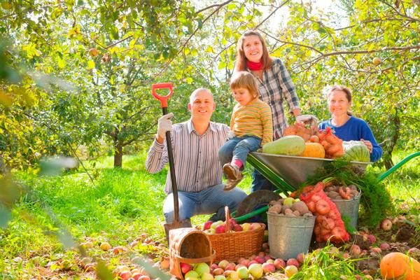 После применения этого удобрения на дачном участке не знали, куда девать овощи. Урожайность повысилась в разы!