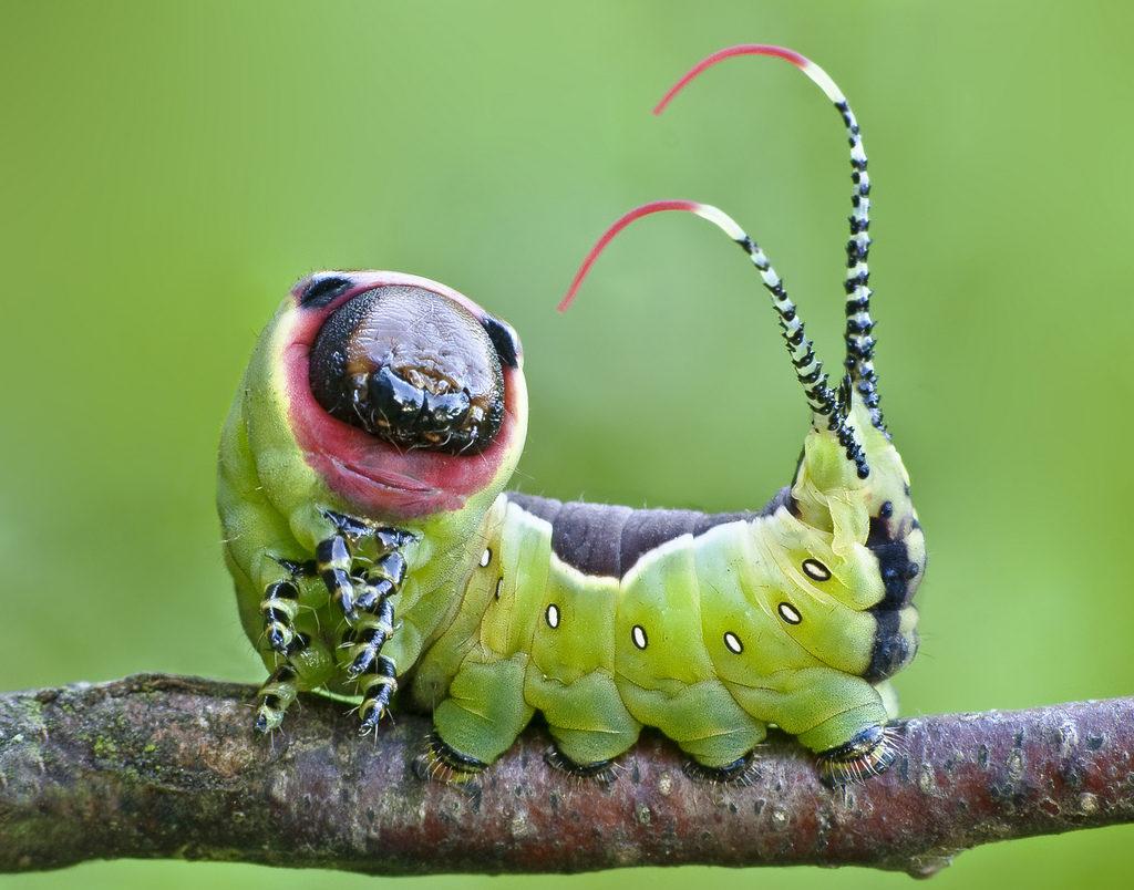 От моего средства все гусеницы будут валяться на земле