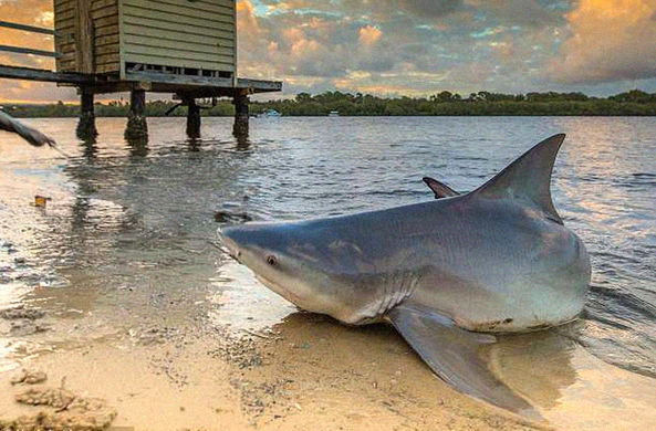 Фотограф снял огромную акулу, но ему не поверили