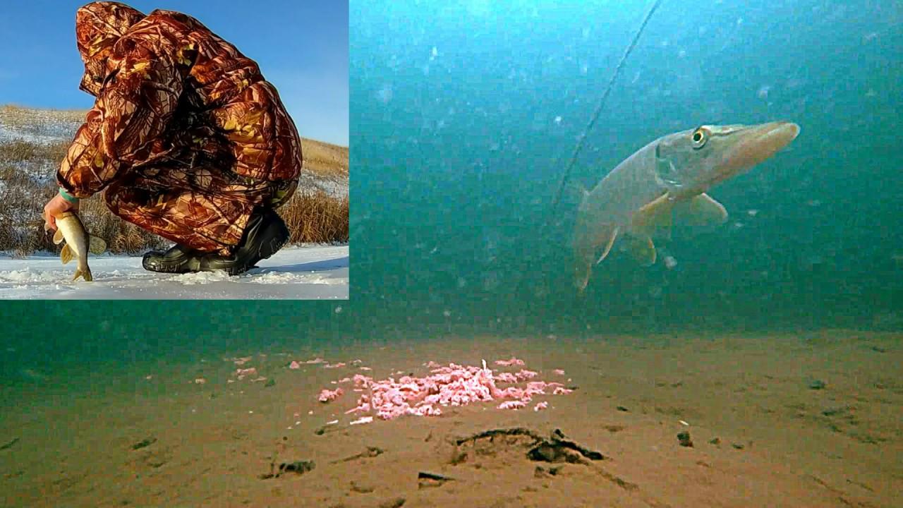 Прикормка КУРИНАЯ ПЕЧЕНЬ + Щука на жерлицы + Подводная съемка
