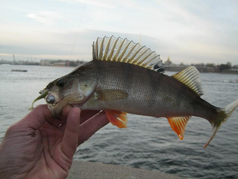 невская рыбалка
