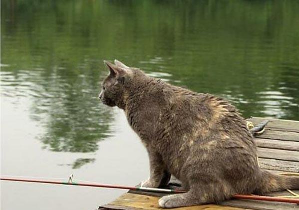 Коты и собака решили половить рыбку. Смешное видео для поднятия настроения.