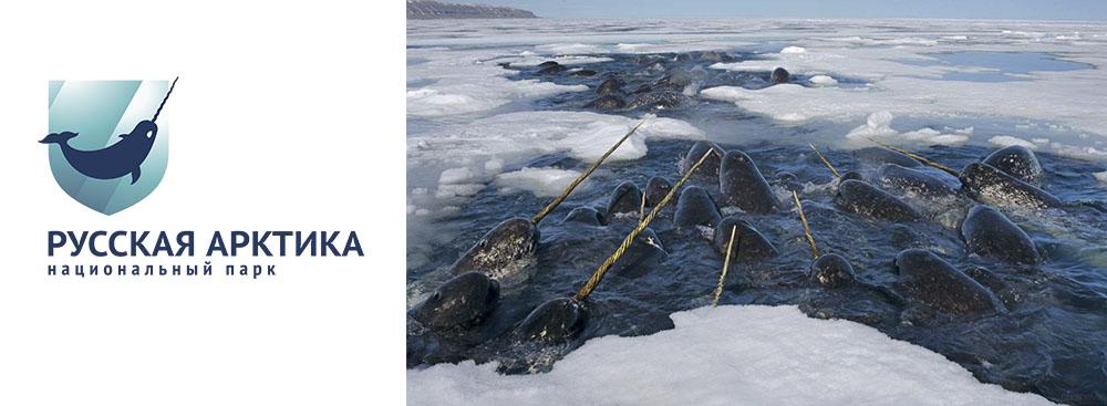 «Русская Арктика» позаботится о русской Арктике