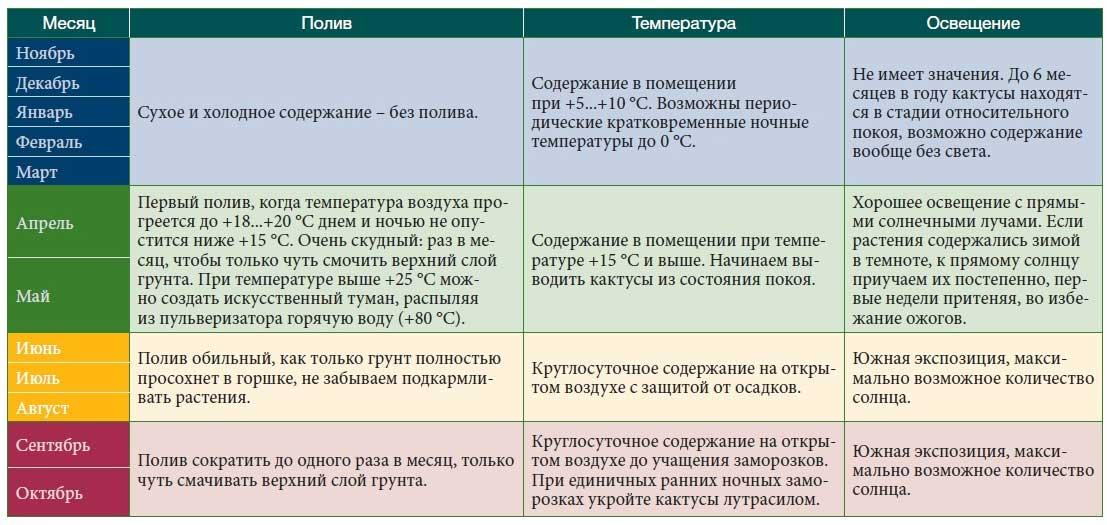 Кактусы и суккуленты Original