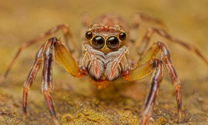 Изысканная красота пауков