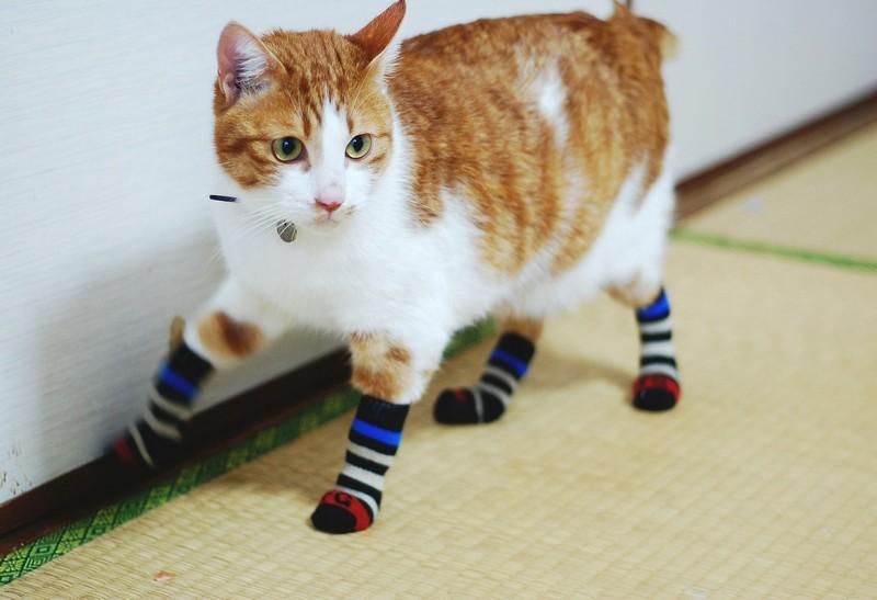 kitties23 30 способов использования котов в хозяйстве