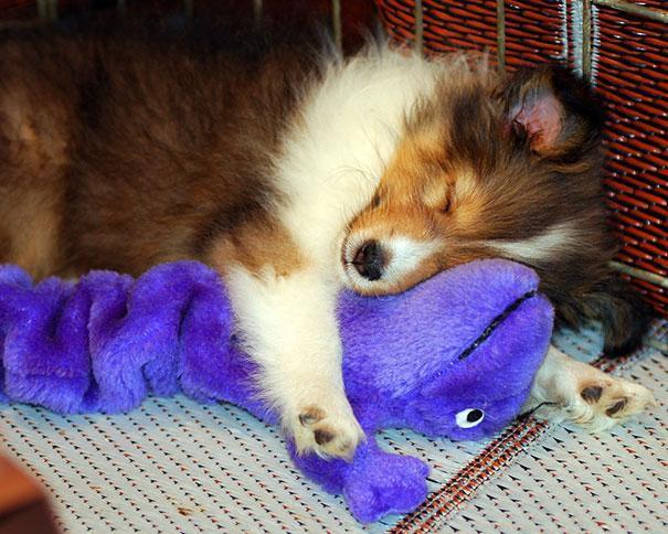 Вечерний позитив. Спящие маленькие животные животные, позитив, сон