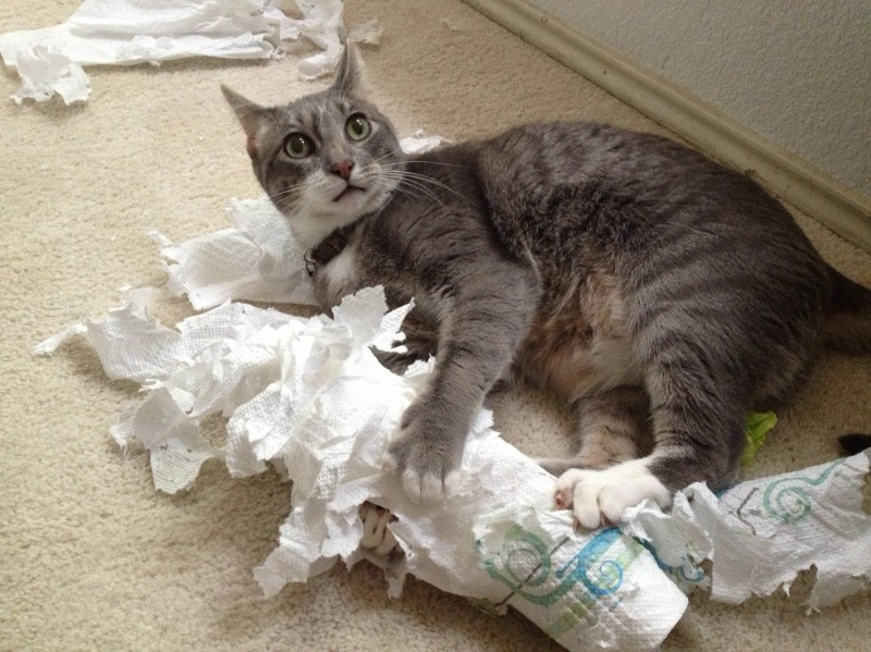 Кот вредитель!