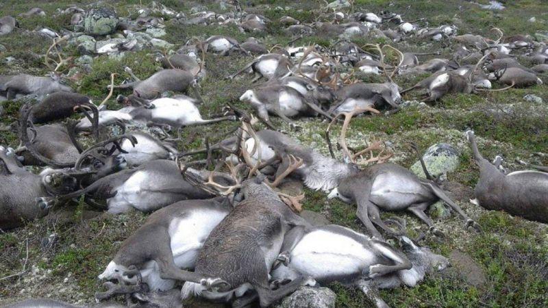 Мощный удар молнии убил стад…