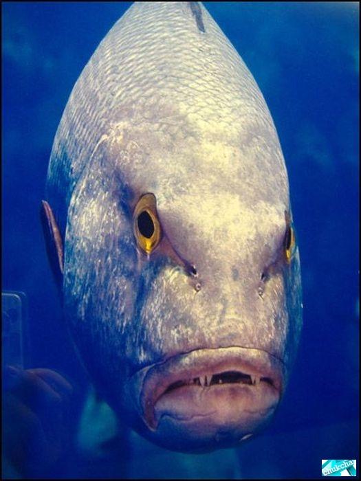 Рыбки с человеческими лицами (30 фото)