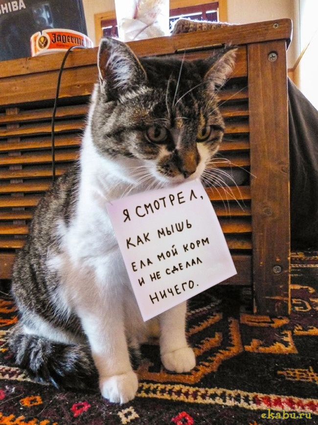 Кошки - явка с повинной