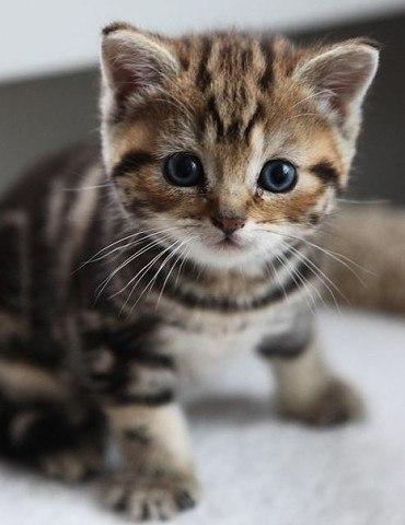 Котики нужны, чтобы отогревать наши холодные сердца